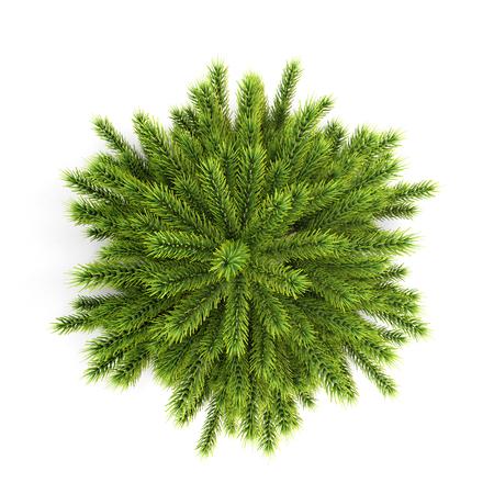 boom: Bovenaanzicht kerstboom zonder versieringen op een witte achtergrond. 3D-afbeelding. Stockfoto