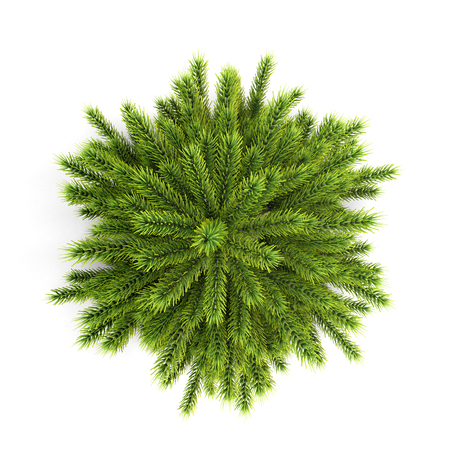 winter tree: Top view christmas tree without ornaments isolated on white background. 3d illustration.