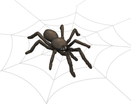 poser: Spider on the web. 3d render image.