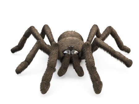 3d spider close-up  isolated on white background.