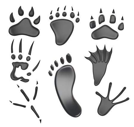 curve claw: Different types of footprints isolated on white background. 3d rendering.