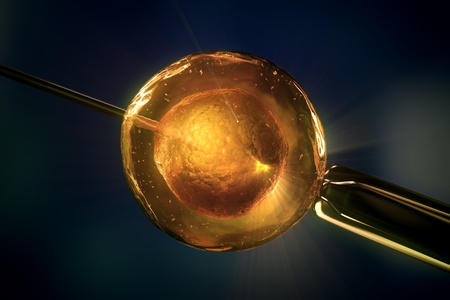 Gros plan sur la f�condation in vitro FIV rendu 3D haute r�solution