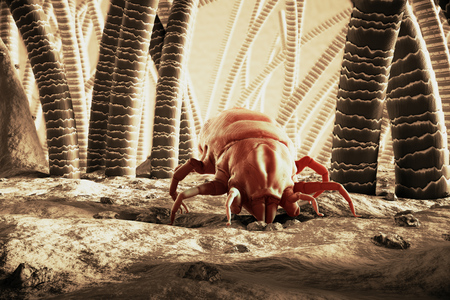 macro: 3D Rendering Of A Dust Mite