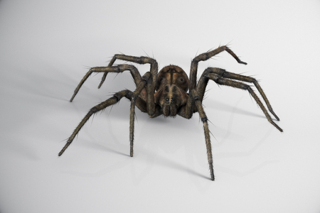 biology backgrounds: One big venomous spider crawling across white wall Stock Photo