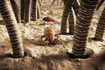 asma: Representaci�n 3D De Un �caros del polvo
