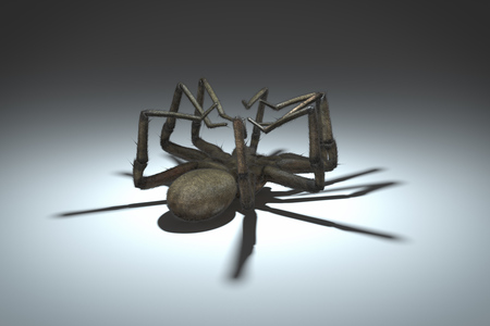 convulsions: Centered view on a dying spider. Stock Photo