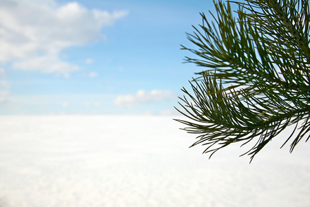 pine branch: Winter landscape with a pine branch, snow and clouds Stock Photo