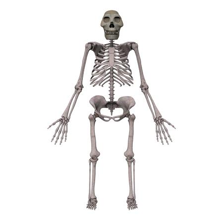 3d render of australopithecus afarensis photo