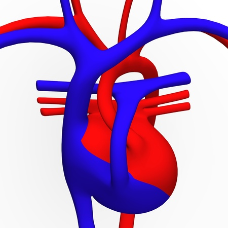 3d render of circulatory system