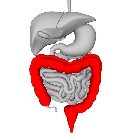 esófago: 3d del sistema digestivo