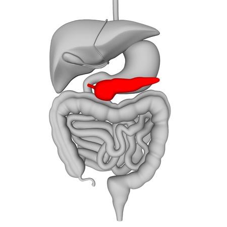 pancreas: Rendu 3d de l'appareil digestif