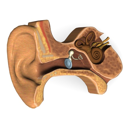 3d render of ear section Stock Photo