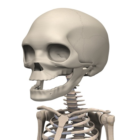 3d render of fetus skeleton Stock Photo