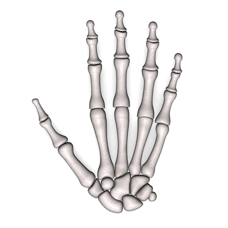 skeletal: 3d render of hand bones