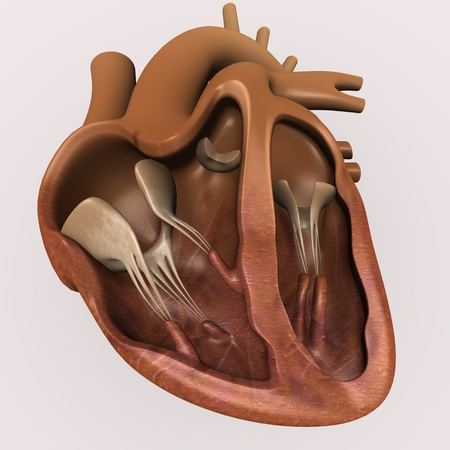 3d render of human heart