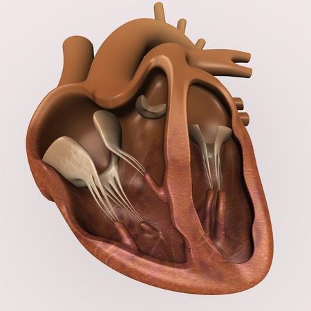 3D render van menselijk hart