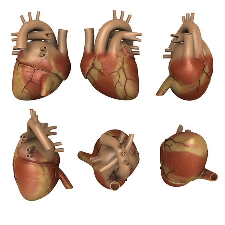 3d render of human heart photo