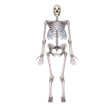 erectus: 3d render of  homo erectus