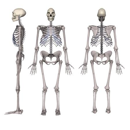 erectus: 3d render of homo erectus Stock Photo