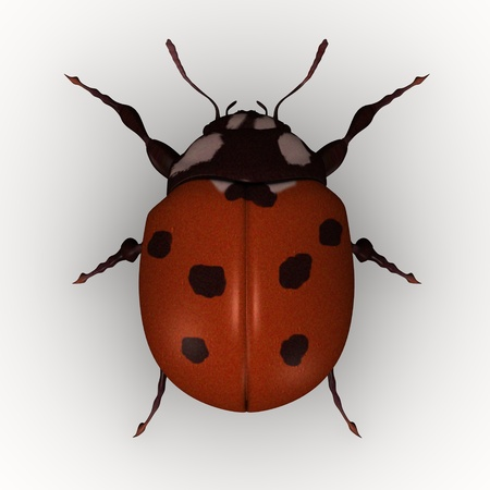3d render of lady bug Stock Photo