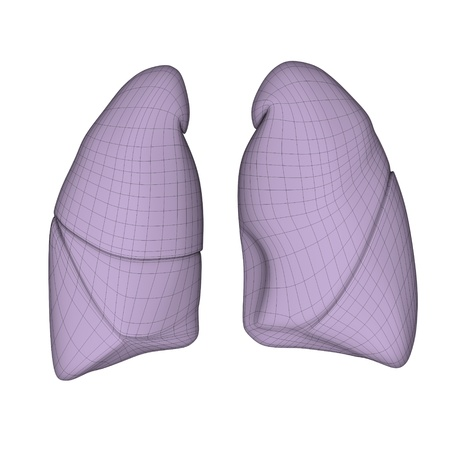 3d render of human lungs photo