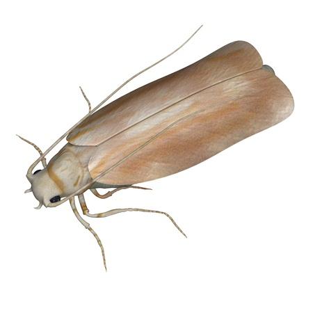3d render of clothes moth