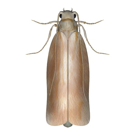 animal mole: 3d render of clothes moth