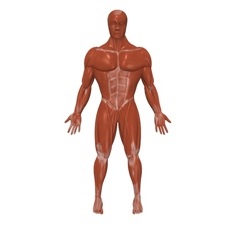 3d render of human muscles