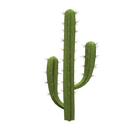 Rendu 3d de cactus saguaro Banque d'images