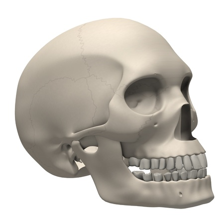 3d render of human skull photo