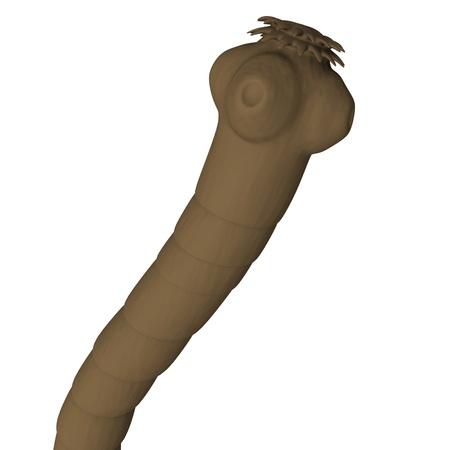 arthropod: 3d render of tape worm