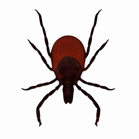 3d render of black-legged tick