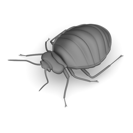 3d render of bed bug