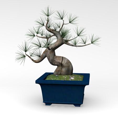 3d render of bonsai tree photo