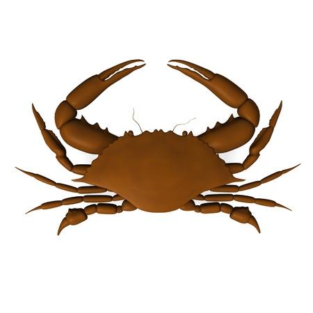 crocket: 3d render of crab animal  Stock Photo
