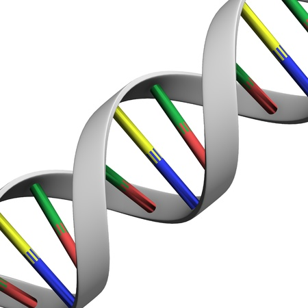 thymine: 3d render of DNA (genetic information) Stock Photo