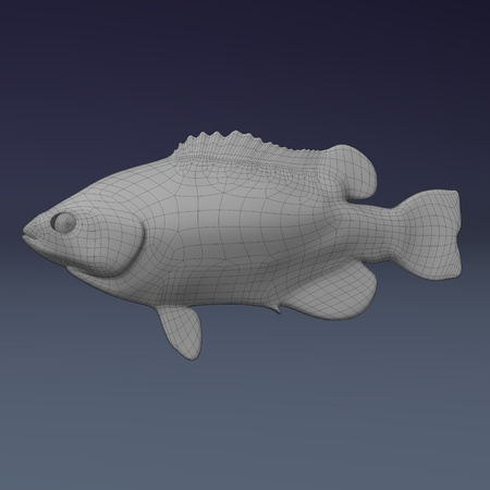 3d render of sea fish photo