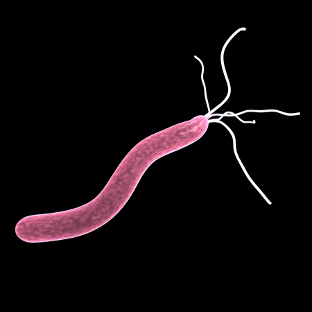 3D rendent d'pylori helicobacer