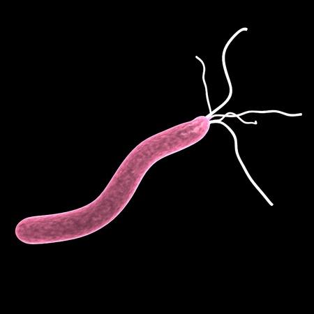 helicobacer ピロリ菌の 3 d レンダリング