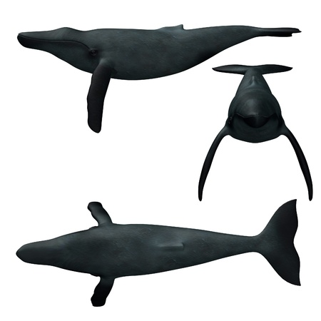 humpback: 3d render of humpback whale  Stock Photo