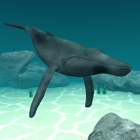 humpback: 3d render of humpback whale  Stock Photo