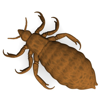 3d render of louse parasite  Stock Photo