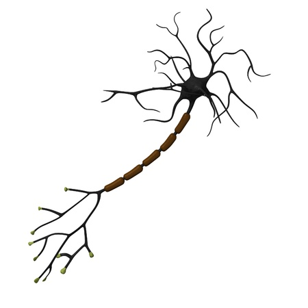nerve: 3d render of neuron cell