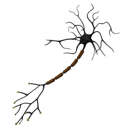 Rendu 3d de la cellule neurone Banque d'images - 12914854