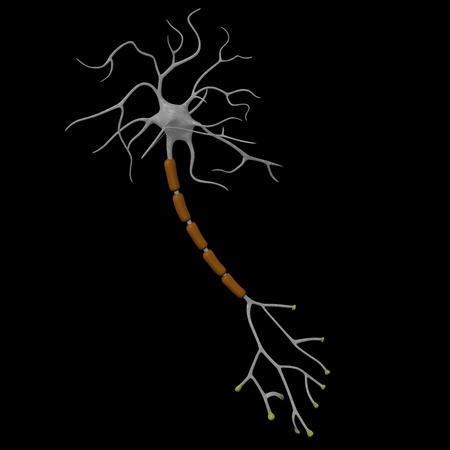 3d render of neuron cell  photo