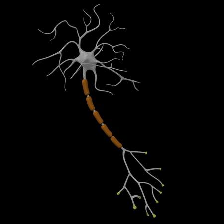 3d render of neuron cell