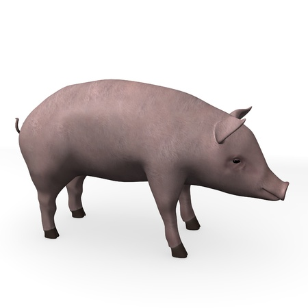 3d render of pig animal  photo