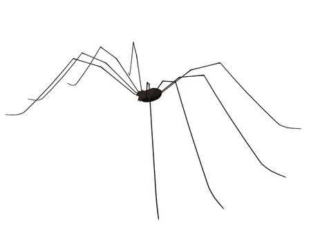 3d render of common spider  Stock Photo - 12915025