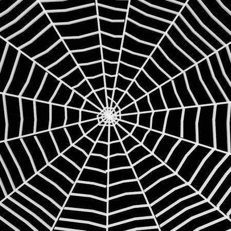 spiderweb: 3d render of spider web