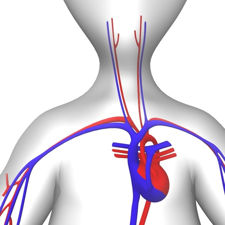 3d render of cartoon character and circulatory system  photo